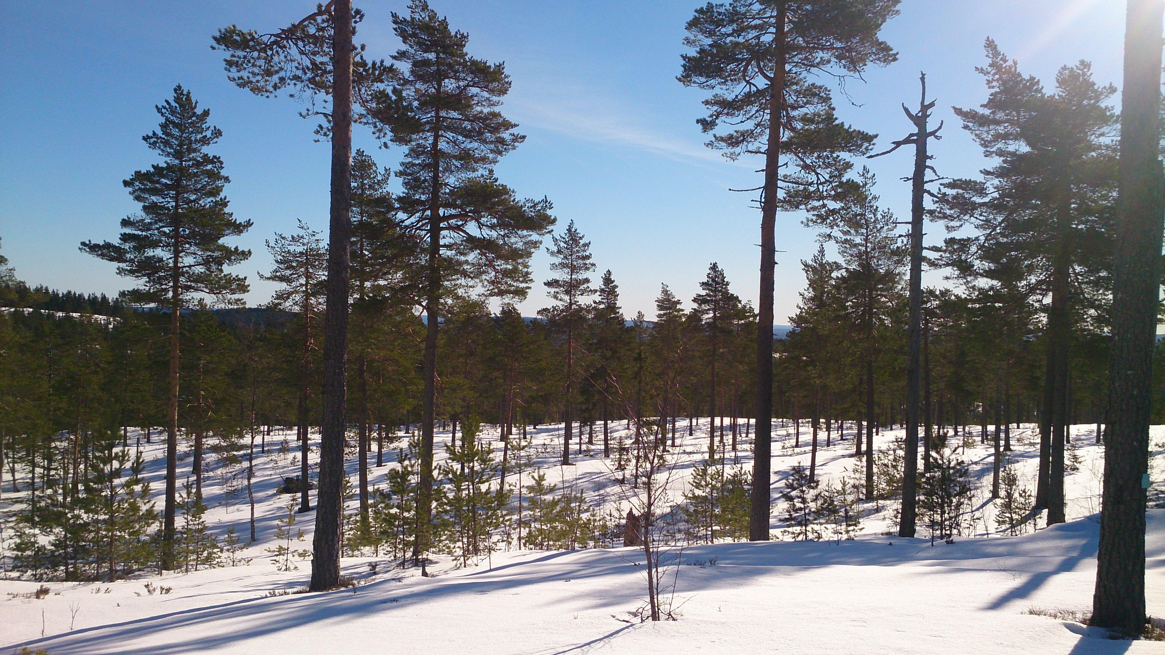Gyllbergen är ett fantastiskt ställe att träna på. Både vinter och sommar!